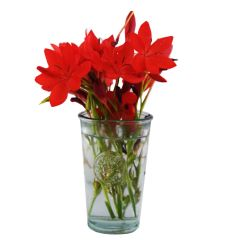 Grehom Recycled Glass Vase - Authentic Clear